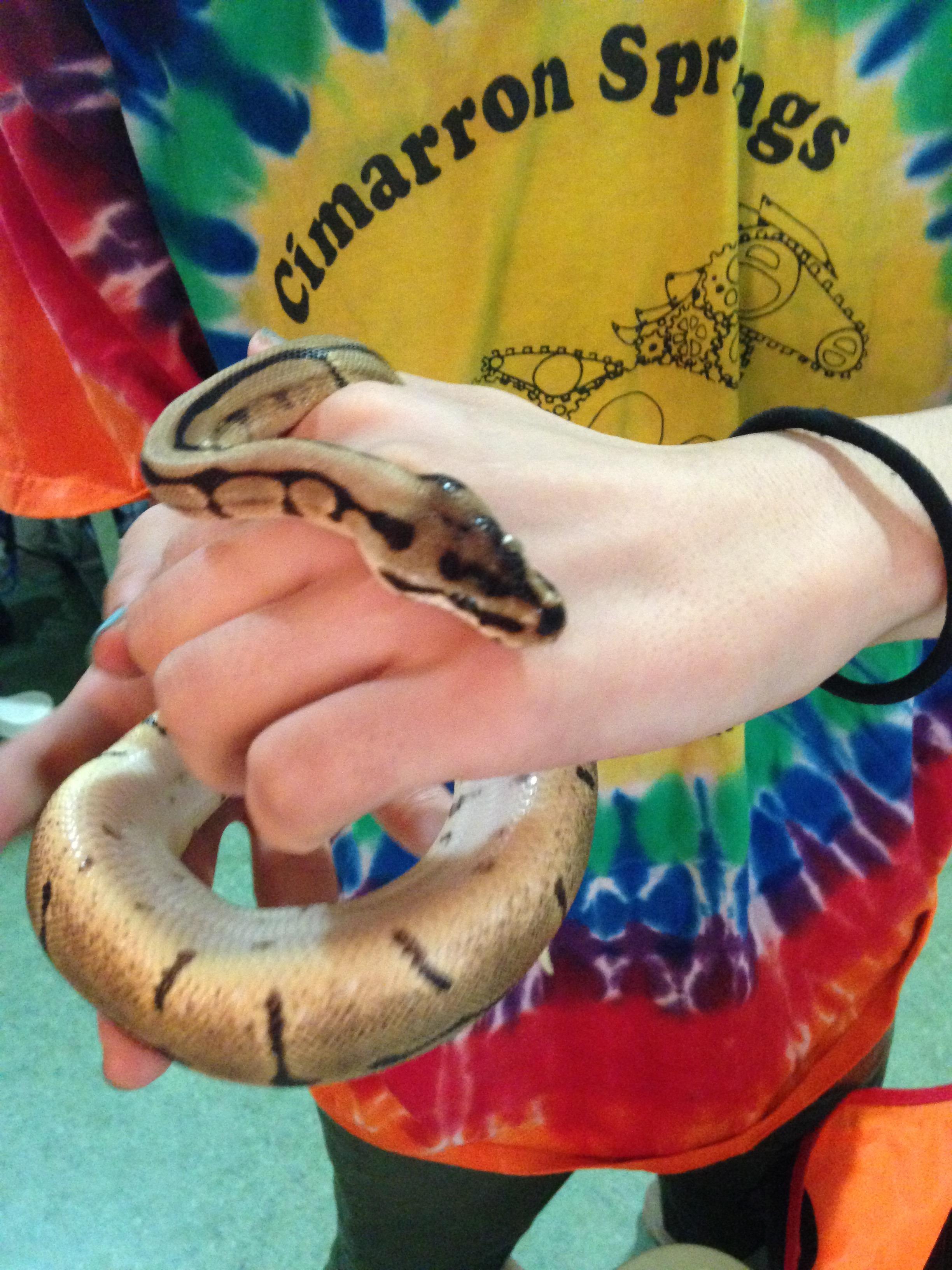 無毒ニシキヘビ